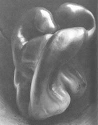 200. EDWARD WESTON. BABURA, 1930.